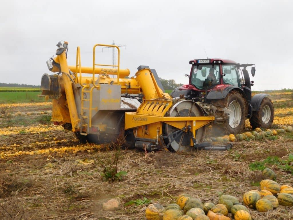 Anbau,Ernte und Inhaltstoffe der Ölkürbisse